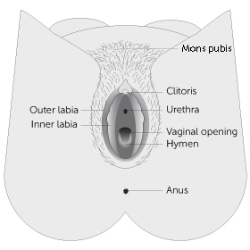Vulvar and Vaginal Care and Cleaning | Center for Young Women's Health