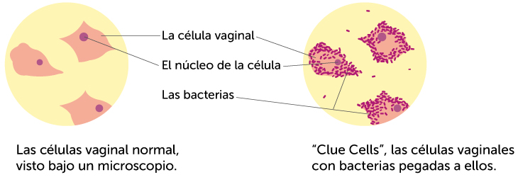 clue-cells-spanish