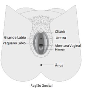 vagina_portuguese